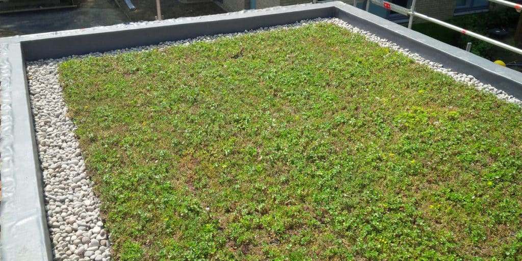 Benefits of green roofing - SPS Roofing Ltd
