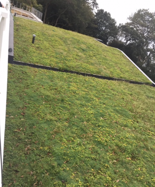 Green Roofs Exeter and Devon - SPS Roofing Ltd
